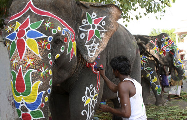 Man paints decorative designs on elephant on eve of Rath Yatra in Ahmedabad