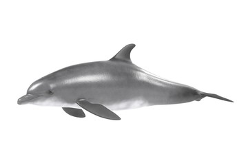 realistic 3d render of bottlenose dolphin