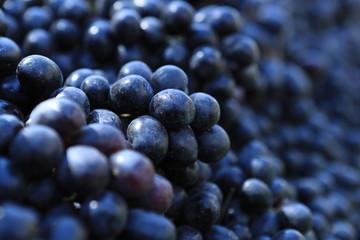 blueberry fresh green food