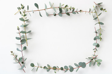 Frame of Beautiful eucalyptus leaves on white backgroundユーカリのフレーム