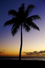 Palm Trees Sunset Near Ocean Beach Tropical Location