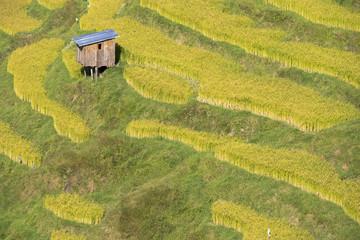 Asia, Bhutan, Trongsa Area. Rice paddies.