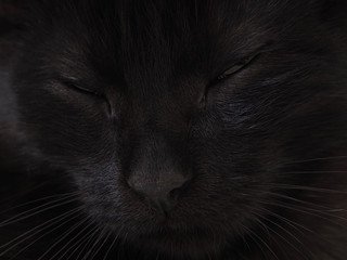 Black - muzzle of cat with eyes closed