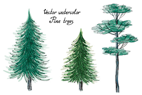 Vector set of hand drawn watercolor pictorial coniferous green trees, isolated on the white background for your landscape design