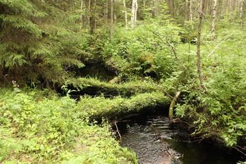 Лесной ручей.