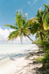 Sandy beach, sea and palm trees in sunshine, Tahiti, South Pacific
