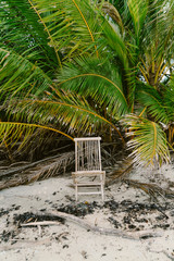 Broken chair on the beach surrounded by palms