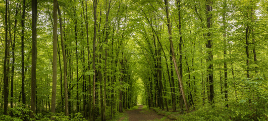 Forest trees in Carpathians mountains in Ukraine