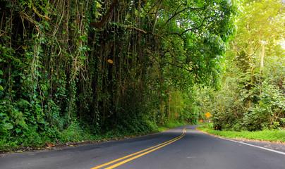Famous Road to Hana fraught with narrow one-lane bridges, hairpin turns and incredible island views, Maui, Hawaii