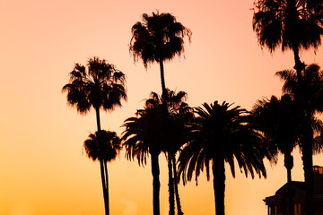Silhouettes of palm trees on beach at sunset
