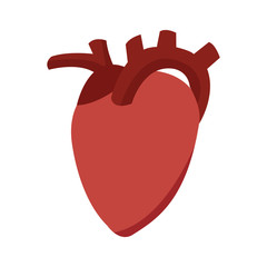 heart organ healthy care medical sport vector illustration
