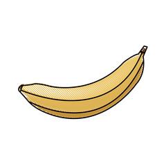 draw banana fruit sweet vitamins food vector illustration