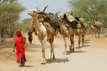 - PHOTO TAKEN 14JAN06 - A Kenyan nomad leads her camels loaded with her belongings along the Wajir r..