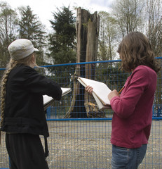 Students sketch the Hollow Tree in Stanley Park, Vancouver