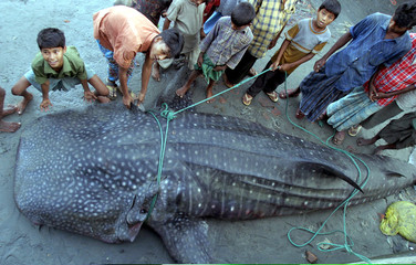 -PHOTO TAKEN 30NOV04- Bangladeshis look at a whale shark caught in the Bay of Bengal at the Cox's Ba..