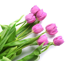 Beautiful bouquet of lilac tulips on white background