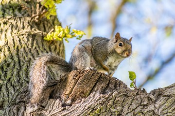 squirrel sitting in tree looking at camera