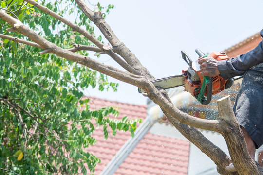 man uses chainsaw cut the tree