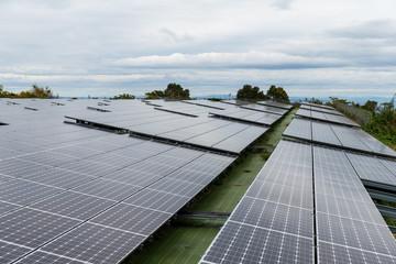 Solar panel plant
