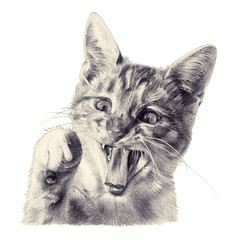 Funny cat painted with colored pencils. Little kitten with raised paw. Isolated illustration on white background. Tinted black and white