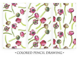 Set of seamless floral patterns with purple buttercup buds on white. Spring flowers. Botanical natural background drawn by hand with colored pencil