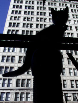 KITTEN IS SILHOUETTED IN WINDOW IN NEW YORK CITY AT CAT ADOPTION EVENT.
