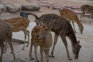 Herd of deer in zoo