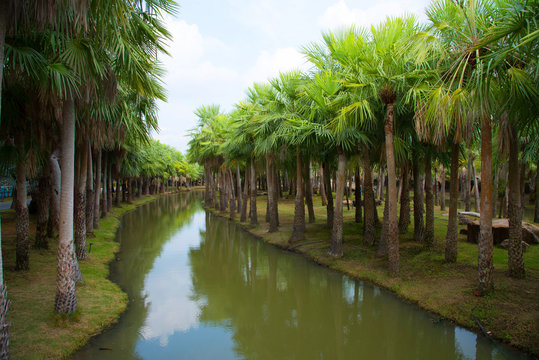Palm garden and canal