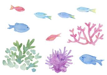 熱帯魚 珊瑚 イソギンチャク 水彩イラスト