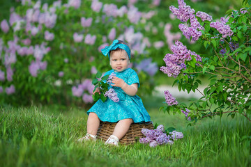 Cute blond baby girl enjoying time on a awesome place between lilac syringe bush.Young lady with basket full of flowers dressed in jeans and stylish shirt relaxing in a cloud of scent.