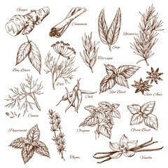 Fototapeta Vector sketch icons of spices and herb seasonings obraz