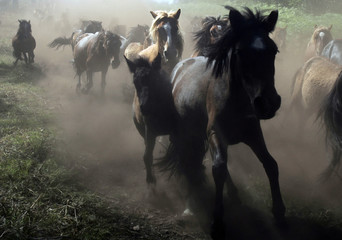 """Wild horses run before being rounded up during the """"Rapa Das Bestas"""" traditional event in Sabucedo."""