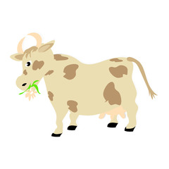 Vector illustration of a cow chewing flower and grass on a white background