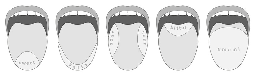 Taste buds areas of the human tongue - sweet, salty, sour, bitter, umami - isolated grayscale vector illustration on white background.
