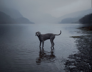 Dog in a loch