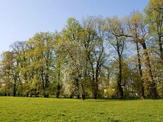 scenic of spring
