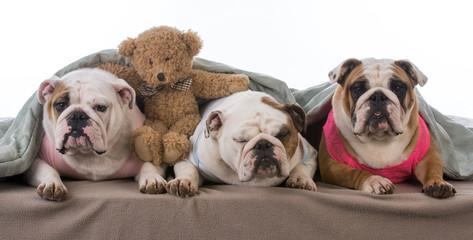 dog pajama party