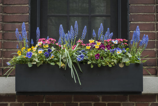 Flower Filled Window Box in New York City