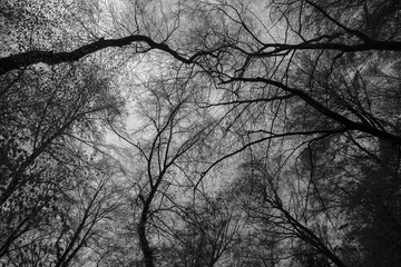 Sky seen through trees in black and white