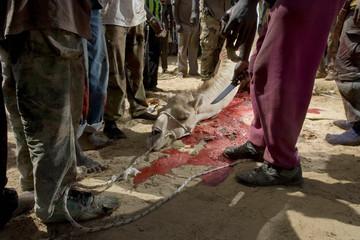 Men stand beside a sacrificed camel on a street in Senegal's capital Dakar