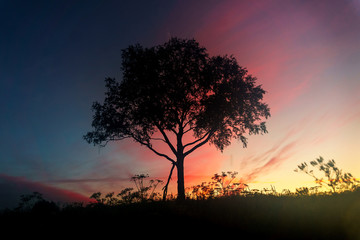 A lonely tree at dawn.