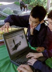 SCHOOL CHILDREN LOOK AT GORILLA WEB-SITE AT SYDNEY'S TARONGA ZOO.