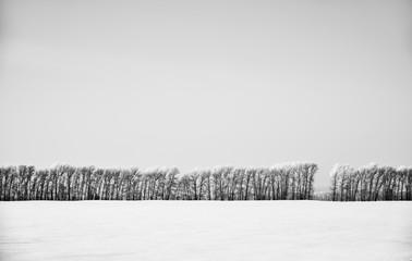 Monochrome winter landscape with forest belt under hoarfrost in snow field in winter season