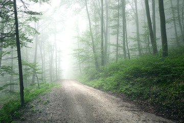 Wall Mural - Dreamy foggy forest road. Lovely green colored woodland.