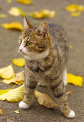 Lovely young tabby cat