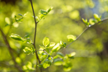 little leaves on branch