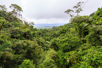 Lush rainforest canopy view