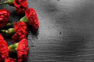 Obraz Dianthus caryophyllus Γαριφαλιά Ռեմոնտանտ մեխակներ قرنفل شائع Garofano Œillet Landnelke Carnation commun Clove pink Clavel Goździk ogrodowy Гвоздика садовая Tarhaneilikka  - fototapety do salonu
