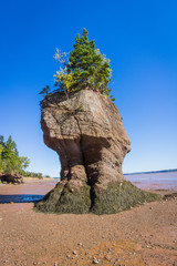Flower Pot, Bay of Fundy, New Brunswick