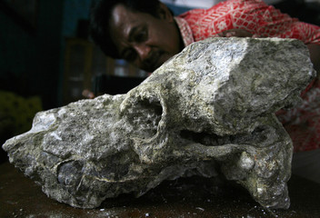 Village chief Karyanto cleans a fossil of an ancient elephant head in Bojonegoro